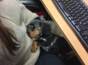 Our new office member..