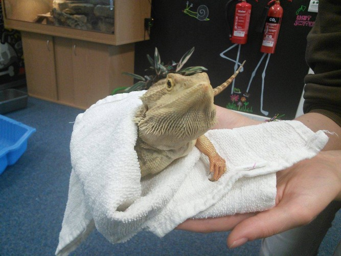 Our first year of Beardie parenthood