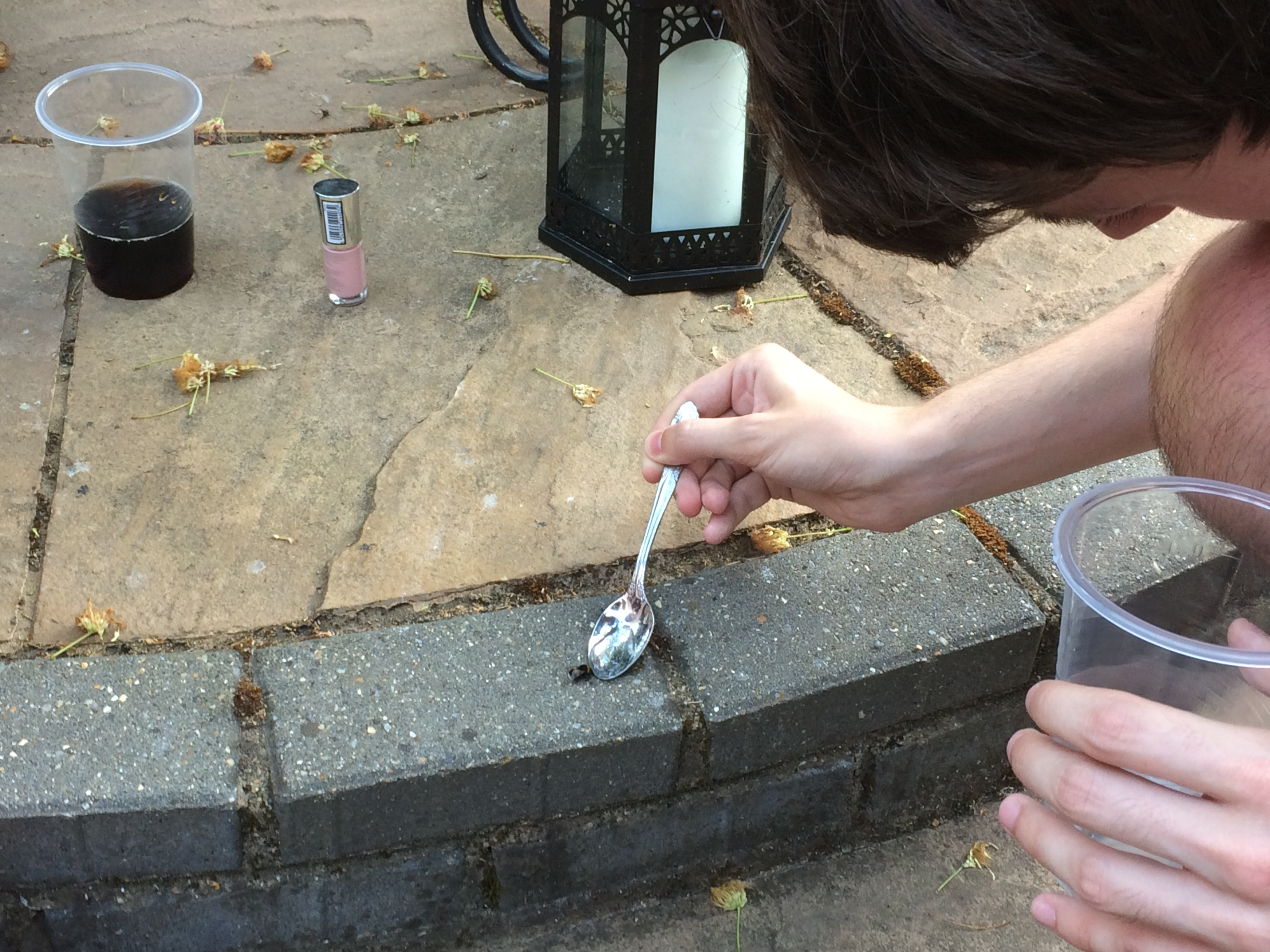 Kieran carefully feeding some sugary water to a bee from a spoon