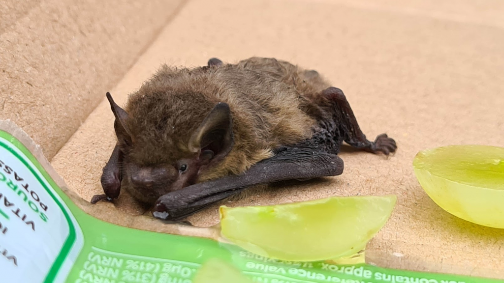 A bat laying on cardboard with some yellow ice cubes melting next to it.