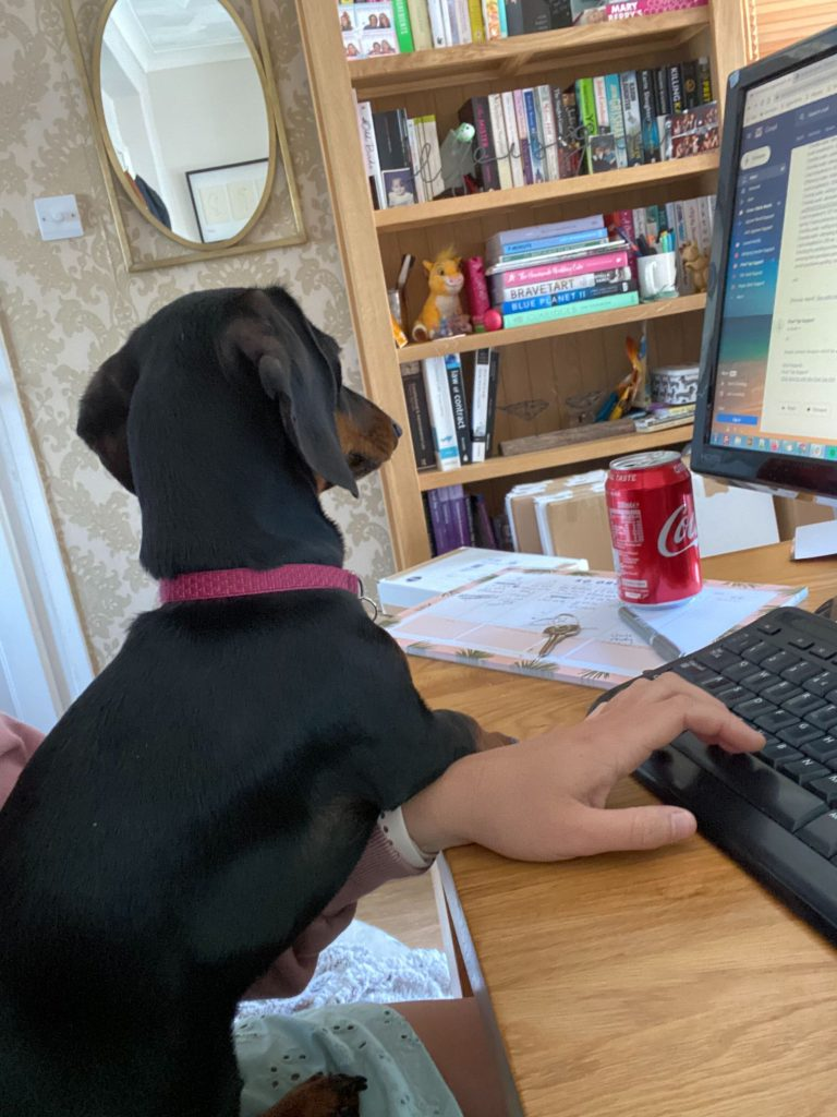 Lottie, a black and brown mini dachshund, leaning on Lauren's arm as she uses her keyboard.